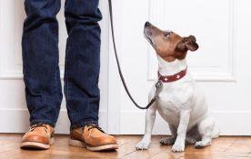 dog walker ensina cachorro a andar de coleira