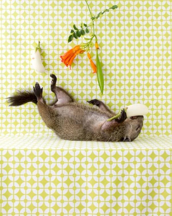 Peaceful Still Life Photographs Combine Kitchenware and Roadkill roadkill 17