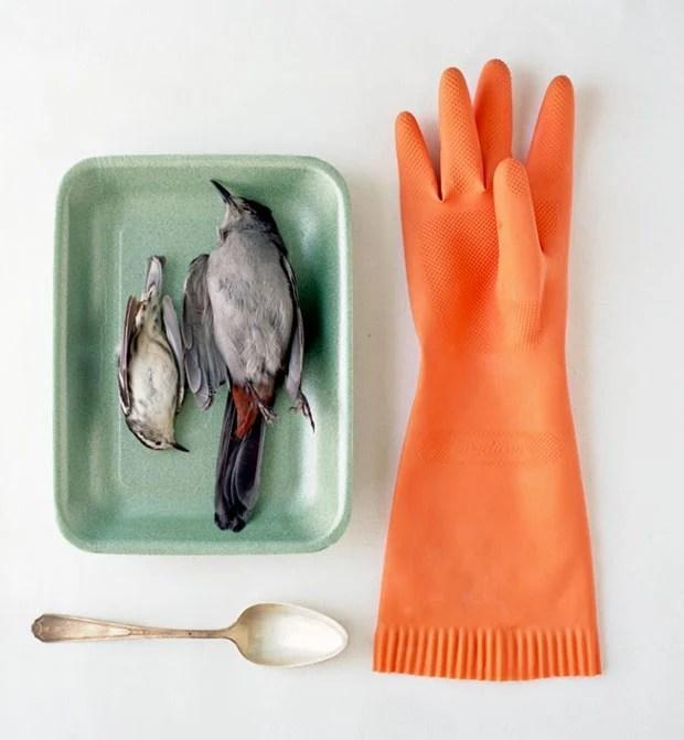 Peaceful Still Life Photographs Combine Kitchenware and Roadkill roadkill 6