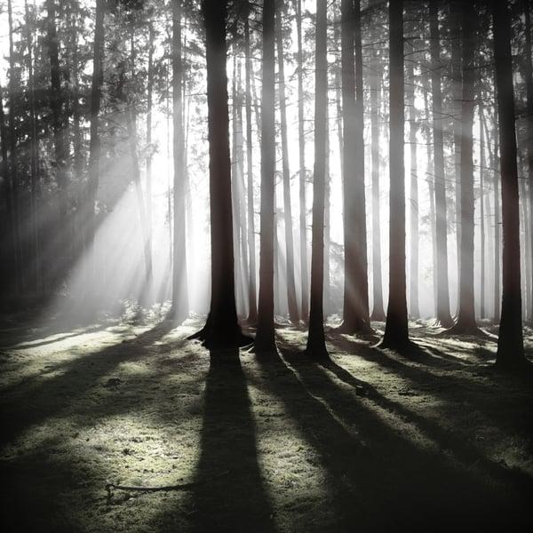 The Forest Photography of Jürgen Heckel 4d7e9d99d95d34aa324cb2d89ece0cf2
