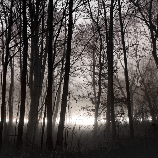 The Forest Photography of Jürgen Heckel 5660754ea1f3bd8973d0f55aaa699ce0