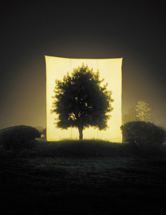 Photographs of Outdoor Trees Framed by Giant White Canvases Tree 11 2005