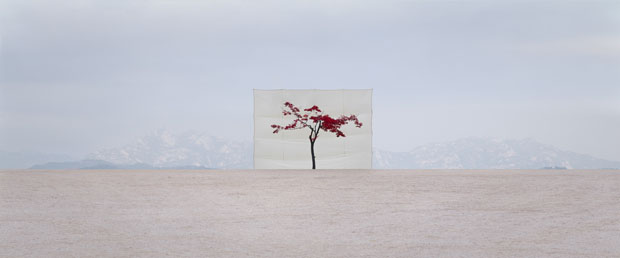 Photographs of Outdoor Trees Framed by Giant White Canvases Tree 5 2007