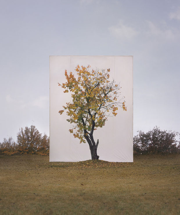 Photographs of Outdoor Trees Framed by Giant White Canvases Tree 8 2007