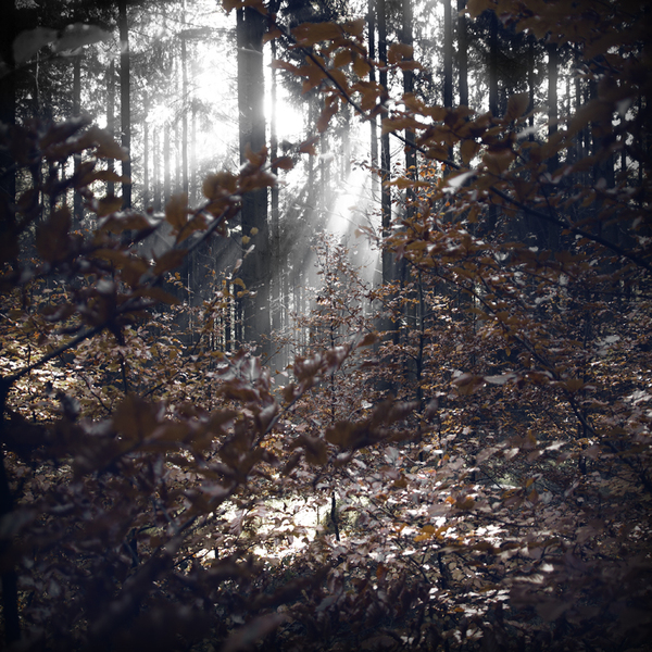 The Forest Photography of Jürgen Heckel ff61cf89f00bfb9dca5aa81b00835022