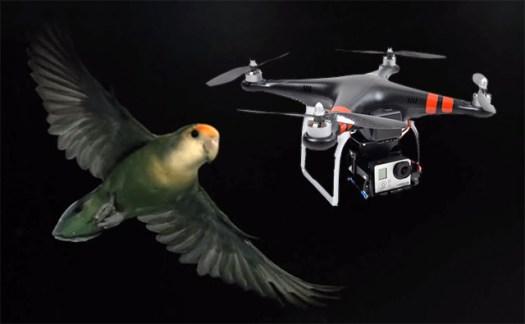 lovebirddrone