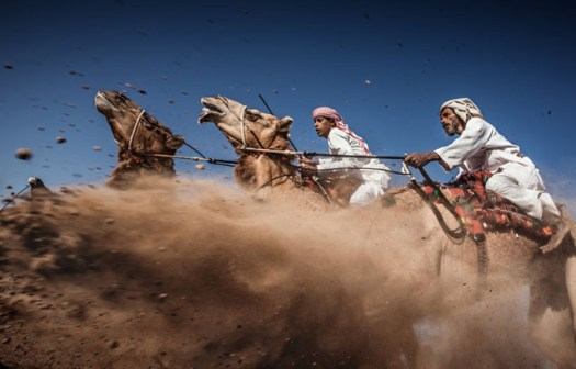 Photo and caption by Ahmed Al Toqi /National Geographic Traveler Photo ContestCamel Ardah, as it called in Oman, is one of the traditional styles of camel racing ... between two camels controlled by expert men. The faster camel is the loser ... so they must be running [at] the same speed level in the same track. The main purpose of Ardah is to show the beauty and strength of the Arabian camels and the riders' skills. Ardah [is] considered one of the most risky situations, since always the camels reactions are unpredictable [and] it may get wild and jump [toward the] audience.