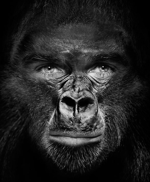 Olivier Pagan, Director Zoo Basel in the style of Albert Watson