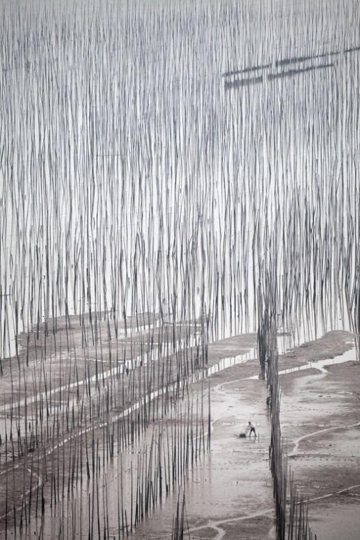 Chinese man using a glider on the mudflats of XiaPu, China
