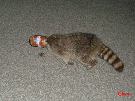 The Peanut Butter Raccoon