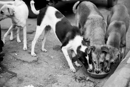 3 brothers are seen having their food together in a single tray.