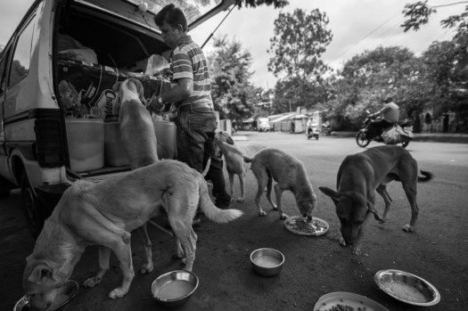 Arun feeds the dogs in multiple trays to avoid unwanted fights between the dogs.