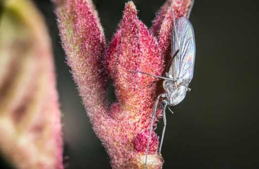 Photographer 3D Printed a 300mm Extension Tube for 5X Macro