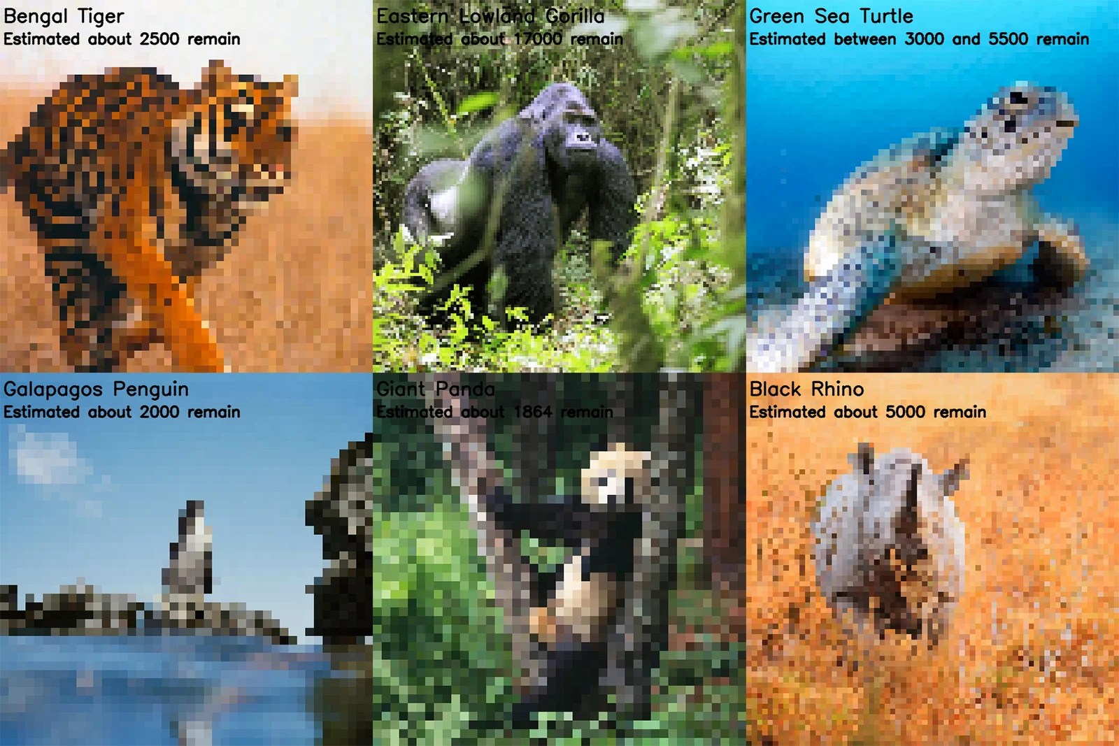 Photos Of Endangered Species Where Every Pixel Represents