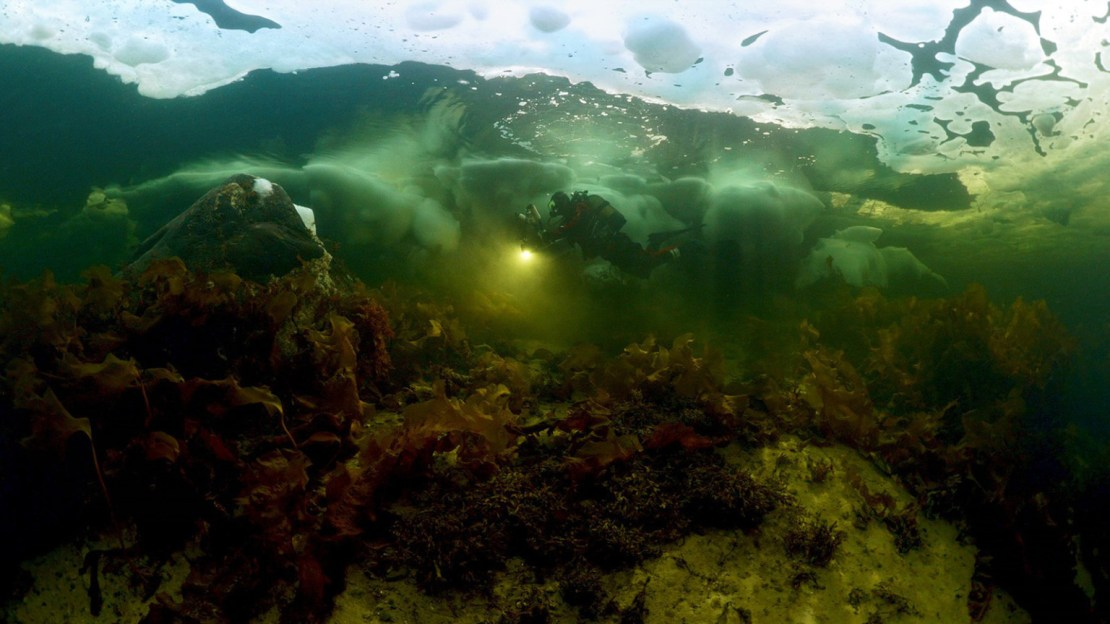 Alexander Semenov swimming in the sea