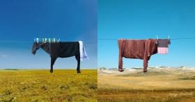 Illusioni giocose realizzate con oggetti domestici
