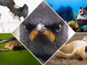I migliori lavori finora dai 2021 Comedy Wildlife Photography Awards