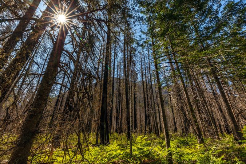 NOCA RebeccaLatson 9219 Sunstar Through The Trees