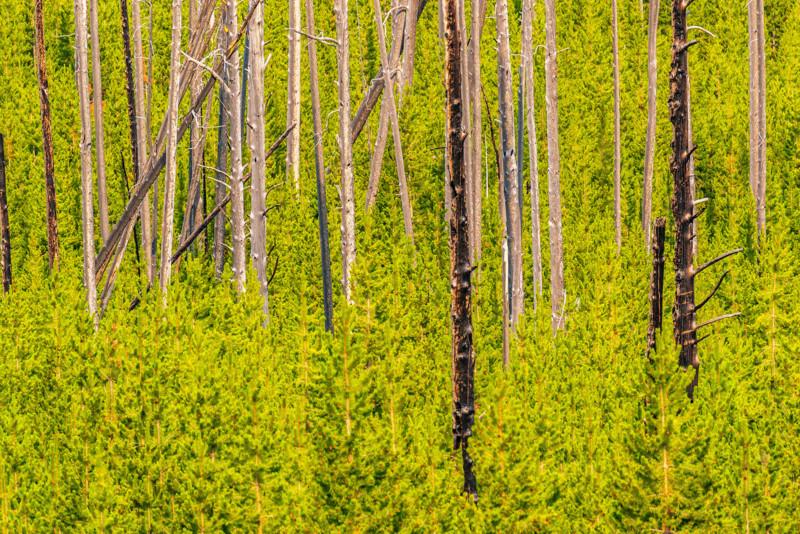 YELL RebeccaLatson 3225 Greenery And Bark