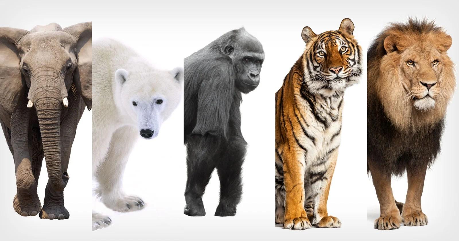 """""""New Big 5"""" della fotografia naturalistica svelata dopo il voto globale"""