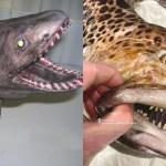 Pescatore russo condivide foto spaventose di creature degli abissi