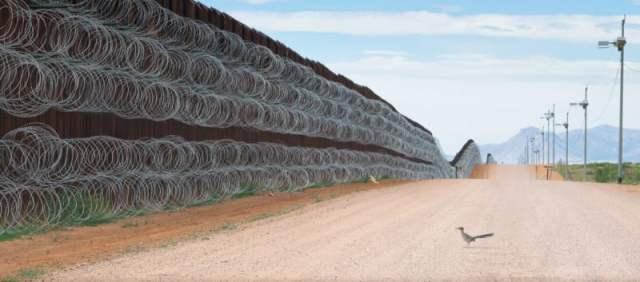Roadrunner Blocked by U.S. Border Wall Wins Best Bird Photo of 2021 |  PetaPixel