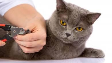 Tırnak Kestiren Kedi