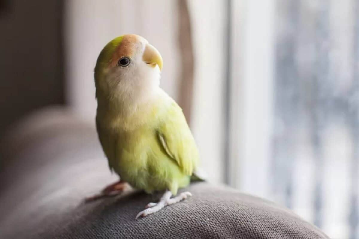 kuşların bağışıklığını güçlendiren yiyecekler