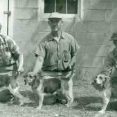 a historia do beagle