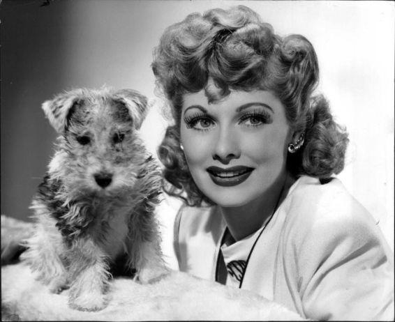 Lucy tinha um fox terrier