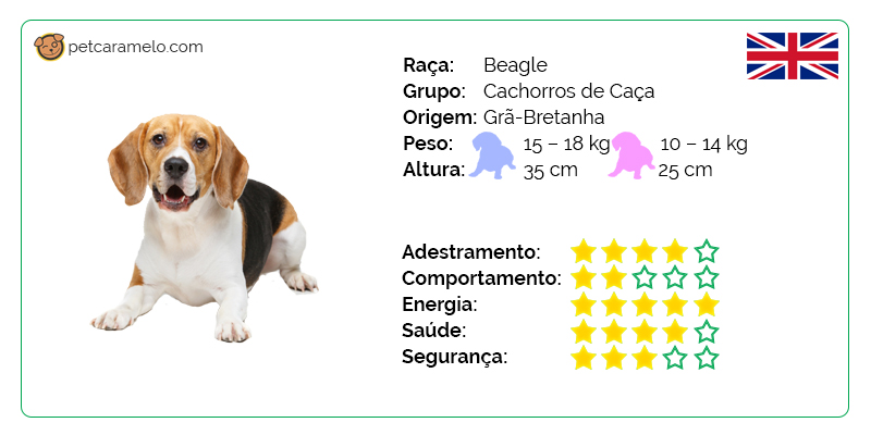 temperamento do cachorro beagle