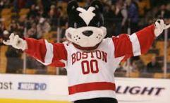 boston terrier mascote