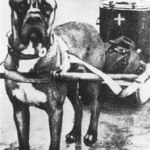 historia cane corso