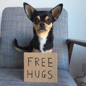 menor cachorro do mundo
