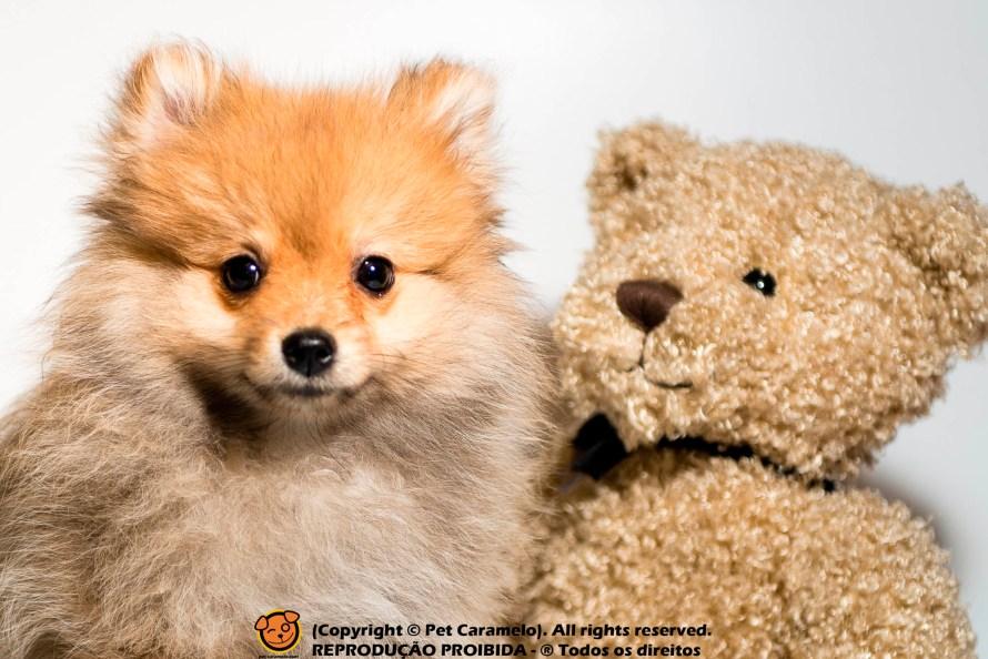 cachorro que parece com raposa