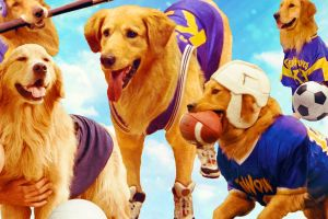 Golden retriever filme BUD