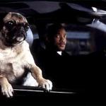 MIB FILME pug cachorro