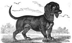 dachshund-historia