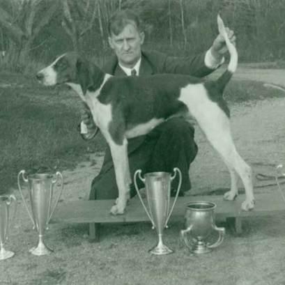 foxhound americano historia