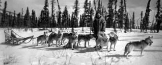 husky siberiano puxando treno