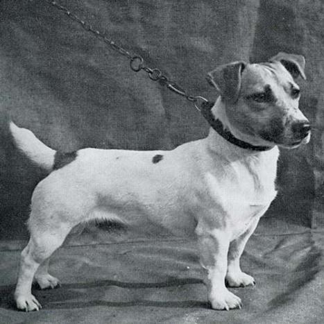 Jack Russel Terrier Historia