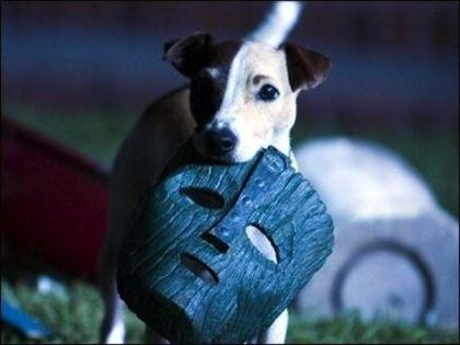 cachorro do Filme o Mascara