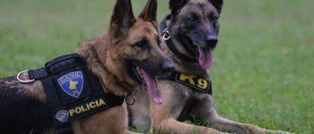 sonhar com cachorro policia
