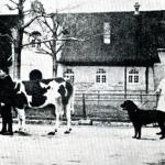 rottweiler historia