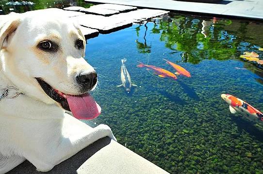 cachorro pode comer peixe cru