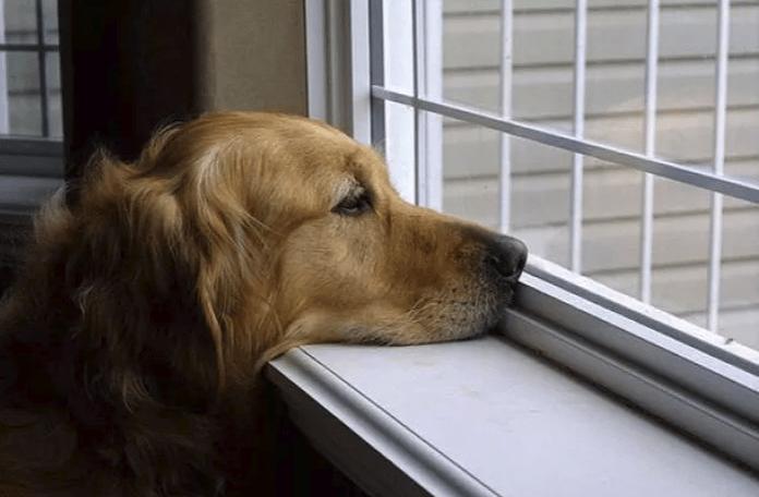 cachorros sentem a falta do dono?