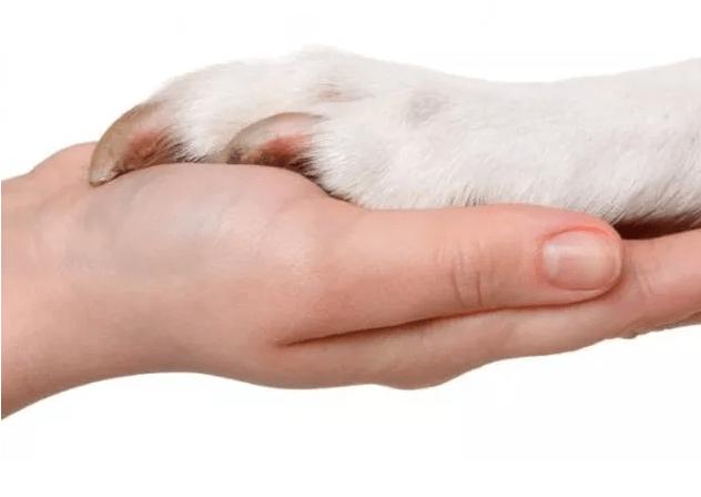 como cortar as unhas do seu cachorro