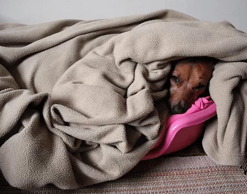 cachorro sente frio
