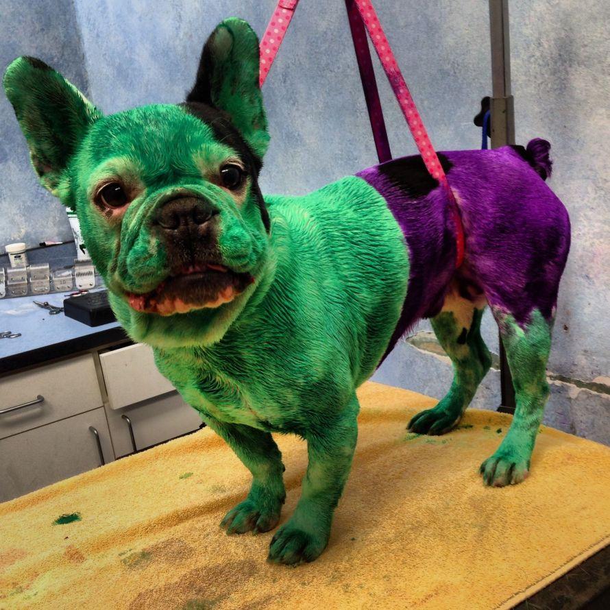 bulldog-frances-hulk