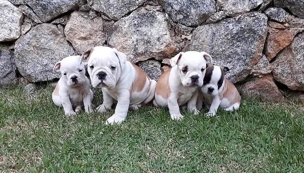 nome para cachorro pequeno